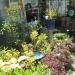 Best Artistic Garden - 1st Place 2015